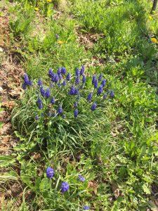 Vines Valais Flowers