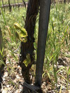Restart Frost Vines